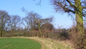 Greater Beaulieu Park